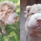 Tonkey Bear est un chien trait pout trait à un ours en pelluche vivant